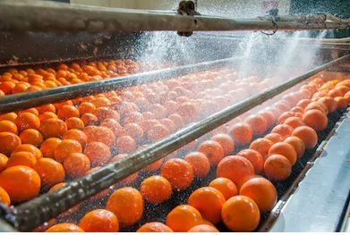 process-washing-cleaning-citrus-fruits_resultado